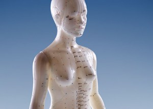 model of woman showing meridians