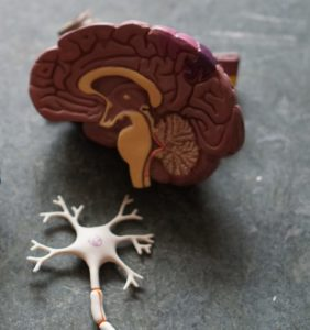 cranial nerve brain